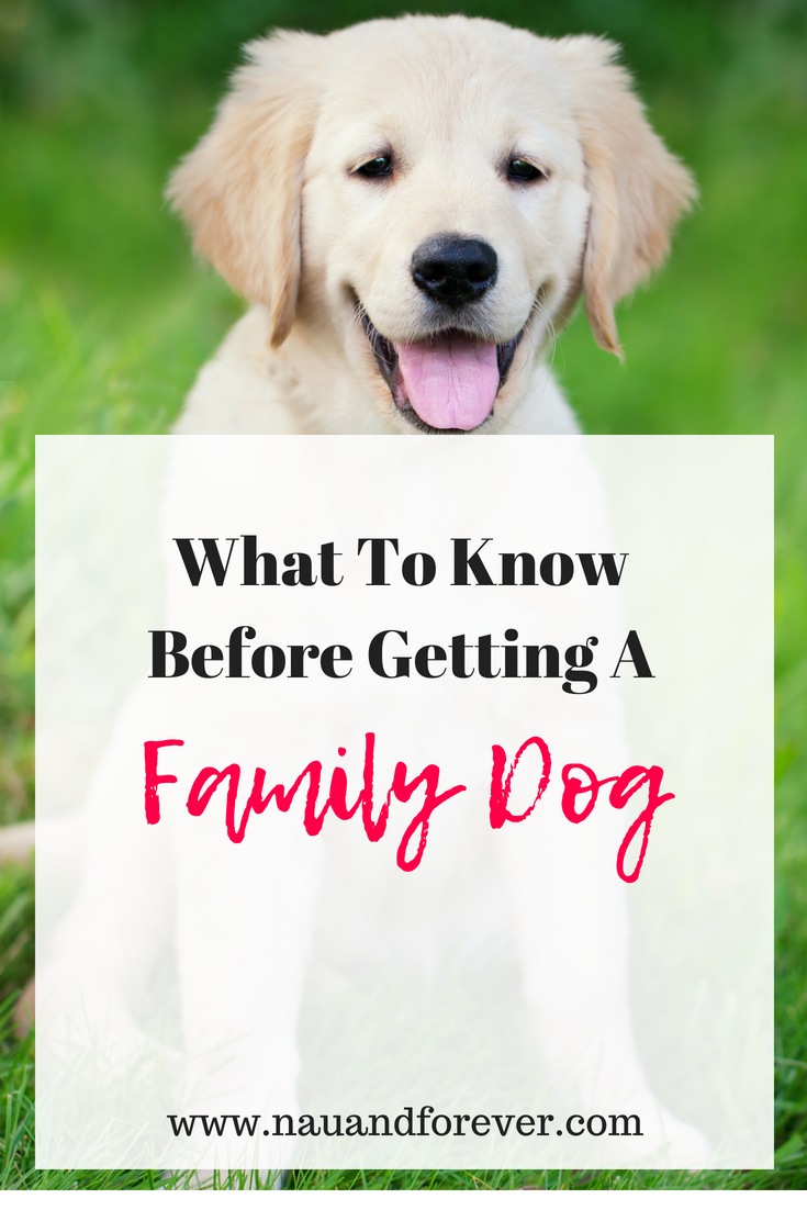 What To Know Before Getting A Family Dog