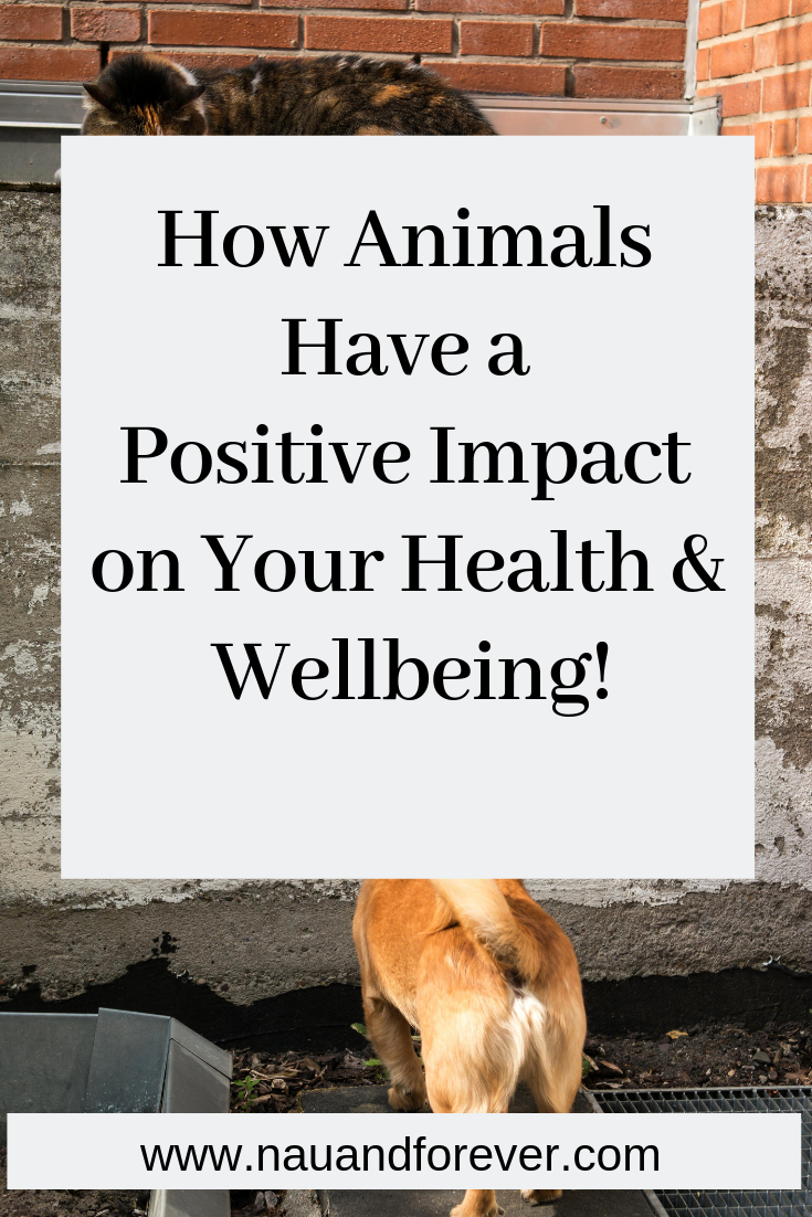 How Animals Have a Positive Impact on Your Health & Wellbeing!